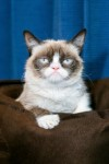фото Сердитый кот